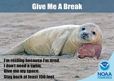 Auch Robben brauchen mal Pause.
