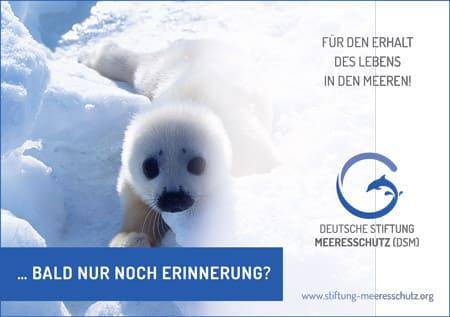 Füllanzeige Deutsche Stiftung Meeresschutz Motiv 'Baby-Robbe 1' A5 quer.