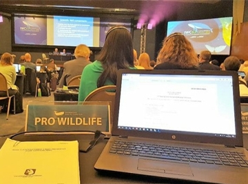 IWC 2018 - Jagd auf Kleinwale