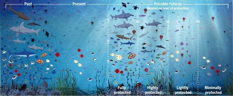 Grafik Schutzniveau und Wirksamkeit von MPAs und ihr Einfluss auf den künftigen Zustand der Ozeane.