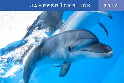 Jahresrückblick 2018 (PDF)