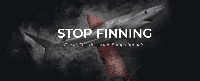 Haie: Stop Finning! Stop the trade!