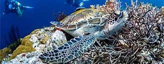Schutzprojekt für Lederschildkröten.