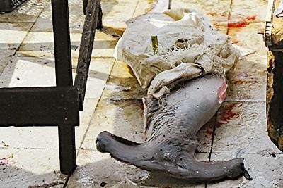 Toter Bogenstirnhammerhai.