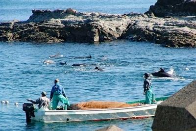 Delfinmassaker, Japan.