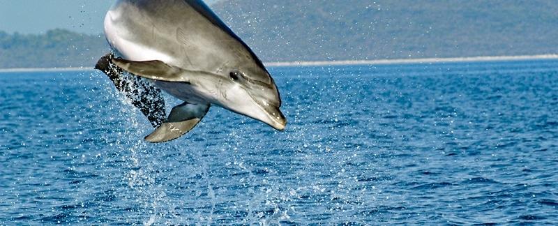 Rettung der letzten Adria-Delfine