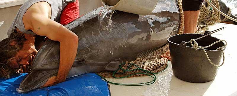 Rettungsaktion für einen Delfin, der sich in der Krka verirrt hatte.