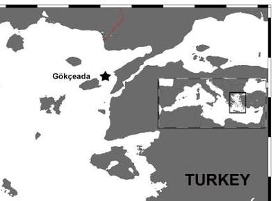 Karte der Sichtungen der Kleinen Schwertwale vor der türkischen Küste.