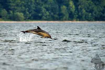 Delfine in der Ostsee? Wie kann das sein?