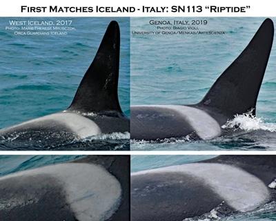 "Orca SN113 ""Riptide"" vor Island und vor Genua."