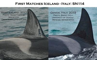 """Orca SN114 """"Zena"""" vor Island und vor Genua."""