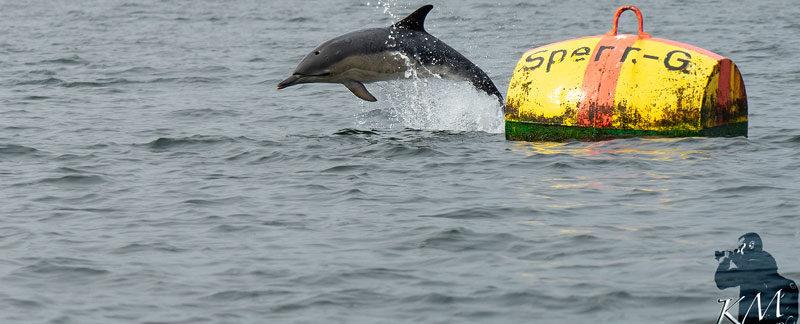Eckernförder Delfin Sandy