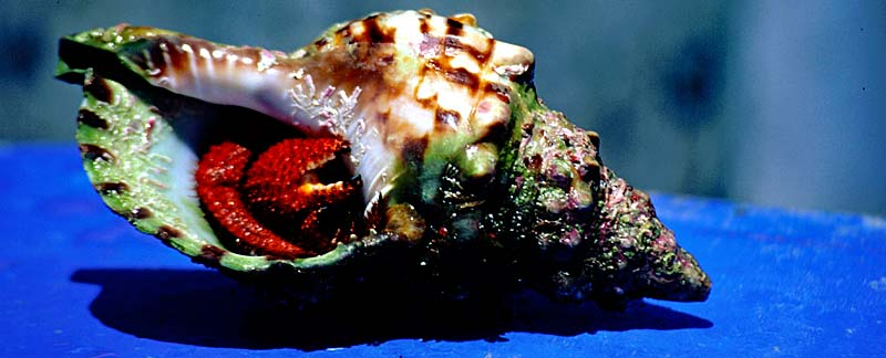 Meerestiere retten