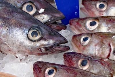 Eu-Fischer fangen zu viele Heringe.