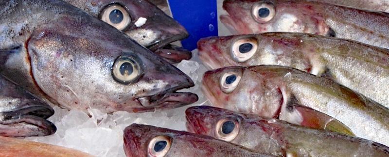 Fisch Des Jahres