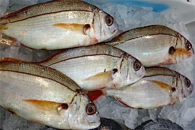 Bedroht durch Tiefseefischerei: Rote Fleckbrassen auf Eis im Fischmarkt.