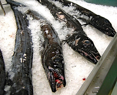 Vier Schwarze Degenfische liegen auf Eis im Fischmarkt.
