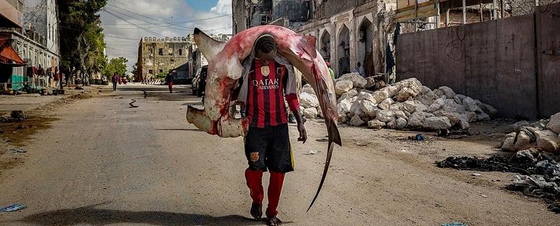 Ein Mann trägt einen sehr großen toten Hammerhai auf den Schultern durch die Straßen von Mogadishu. Von Marco Gualazzini - wikimedia