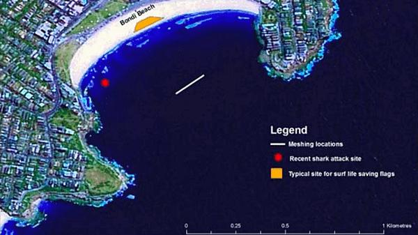 Das Hainetz (weiße Markierung) vor Bondi Beach konnte den Haiangriff nicht verhindern (roter Punkt).