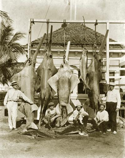 Fischer aus Miami mit Schmalzahn-Sägerochen um 1920.