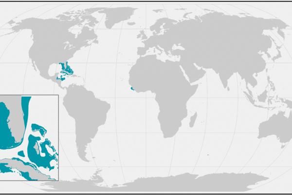 Weltkarte mit den verbliebenen Lebensräumen der Schmalzahn-Sägerochen (Pristis pectinata).