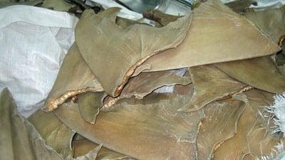 Ein Stapel Haiflossen.