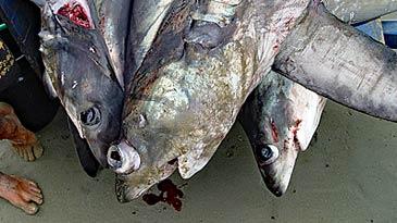 Nachhaltiger Haitourismus