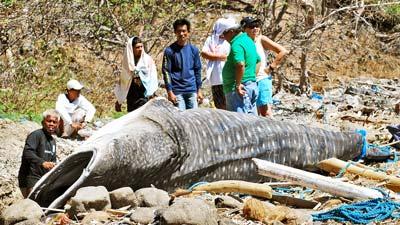 Toter Walhai mit abgeschnittenen Flossen am Strand.