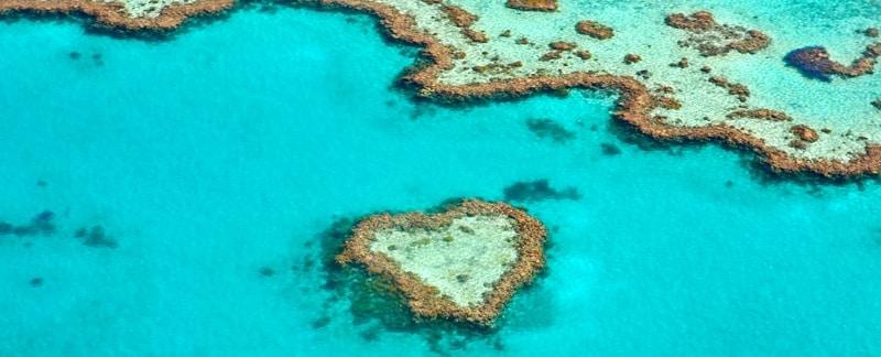 Korallenriffe sind die Kinderstube für über 25 Prozent aller Meeresbewohner – und sie sind in großer Gefahr.