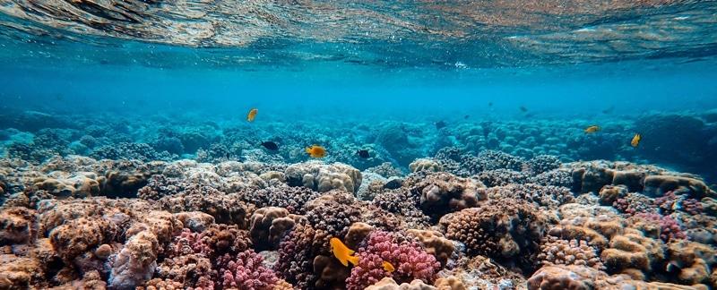 Flachwasser Korallenriff.