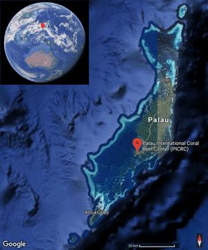 Forschungsgebiet von Pia Lewin in Palau Übersicht.