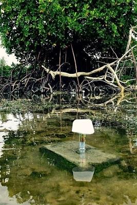 Zementblöcke vor Mangrovenbaum.