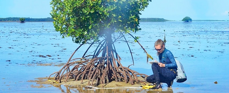 Junger Mangrovenbaumauf einem Riffdach in Fidschi.