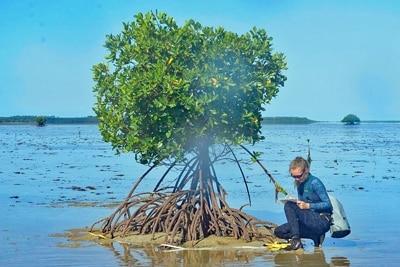 Mangroven auf Riffdächern