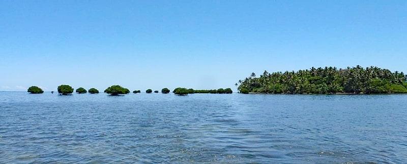 Mangroven auf Riffdächern in Fidschi.