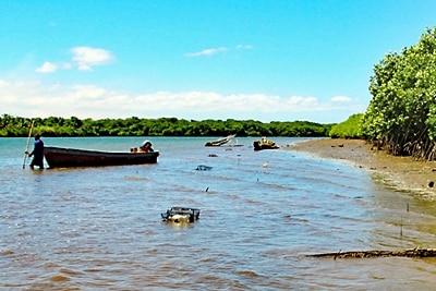 Fischerei in Mangrovenwäldern: Netzkäfige im Delta des Rewa Flusses.