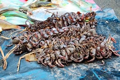 """Fischerei in Mangrovenwäldern: Mangrovenkrabben (""""Kuka"""" - Sesarmidae) in traditionellen Bündeln auf dem Markt."""