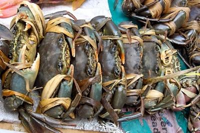 """Fischerei in Mangrovenwäldern: Mangrovenkrabben """"Qari"""" (Scylla serrata) in traditionellen Bündeln auf dem Markt."""
