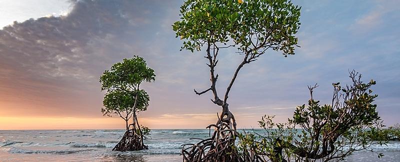 Mangroven und Mangrovenwälder.