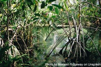 Mangrovenwälder gehören neben Korallenriffen und tropischen Regenwäldern zu den produktivsten Ökosystemen der Erde.