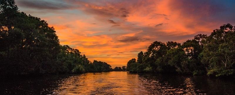 Mangrovenwald im Sonnenuntergang.