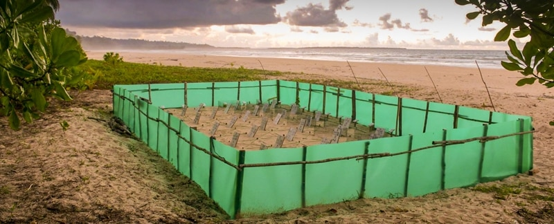 Aufzuchtstation für Lederschildkröten auf Sipora.