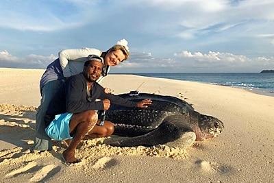 Dr. Hiltrud Cordes und Euclides Resende mit einer besenderten Lederschildkröte.