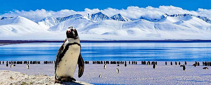 Pinguine im Schutzgebiet mit Verfallsdatum.