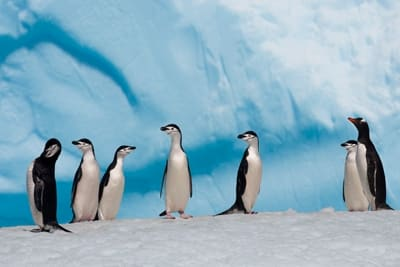 MPA Rossmeer in der Antarktis: Sieben Pinguine stehen herum.