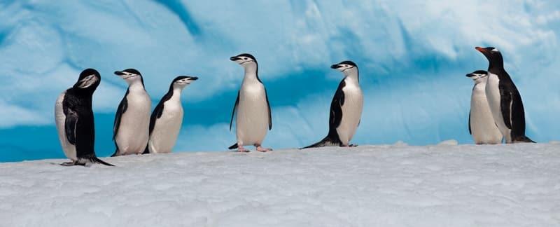 Antarktis: Verpasste Chance