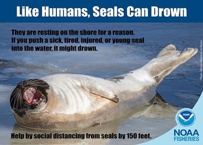Abstand halten - auch von Wildtieren wie Robben.