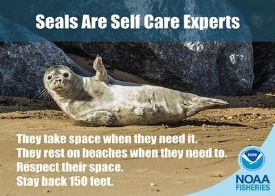 An Land ruhende Robben brauchen keine Hilfe, sie brauchen eine Pause!