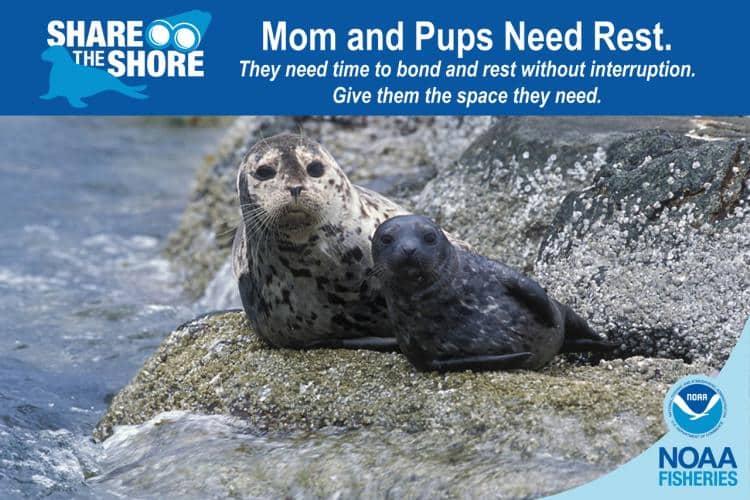 Zum Internationalen Tag der Robben: Mom and Pups need Rest – Bitte Abstand halten von Robben an Land!