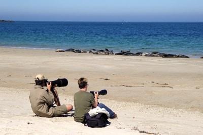 Fotografen halten Abstand zu einer Kegelrobben Kolonie.